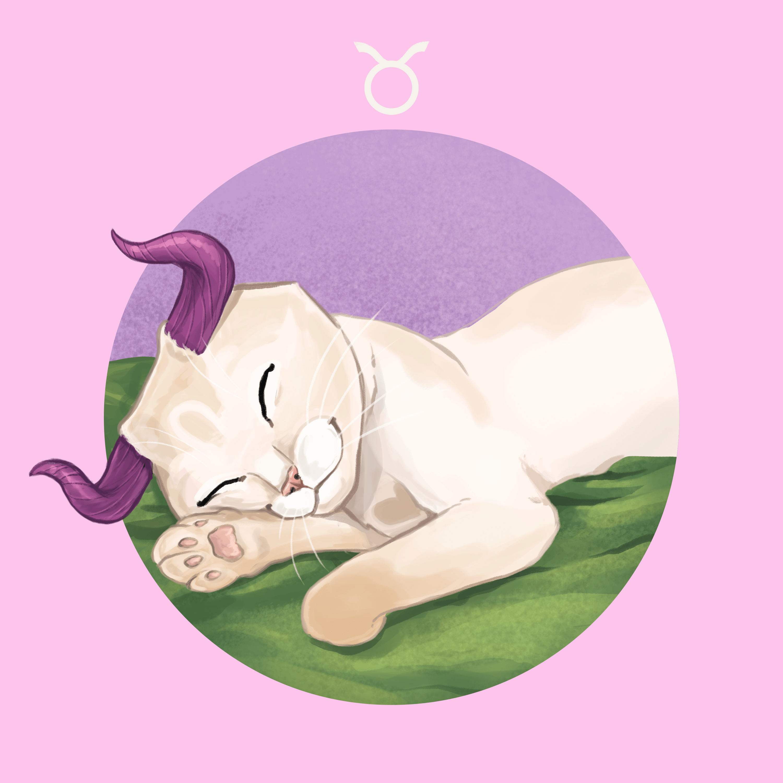 Katze Stier
