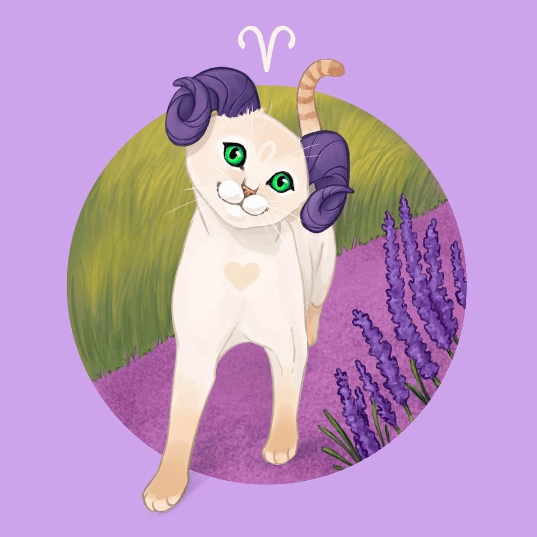 Katze Widder