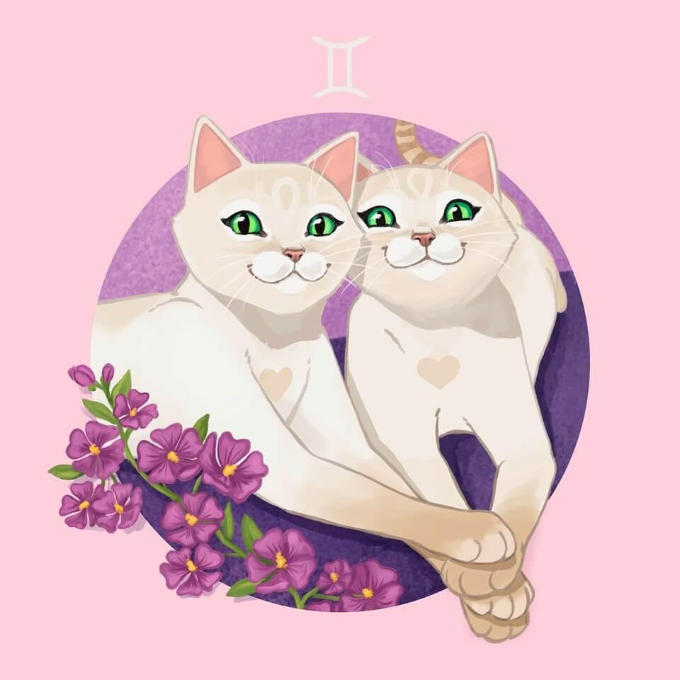 Katze Zwillinge